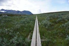 trail för konung s Royaltyfria Foton