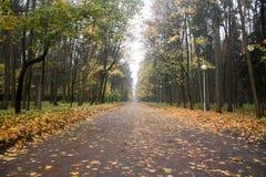 trail för molnig för fern för höstbokträd slapp sky för lighting mycket Royaltyfri Fotografi