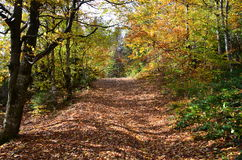 trail för molnig för fern för höstbokträd slapp sky för lighting mycket Arkivfoto