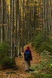 trail för molnig för fern för höstbokträd slapp sky för lighting mycket fotografering för bildbyråer