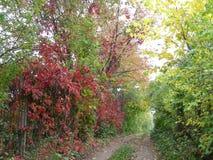 trail för molnig för fern för höstbokträd slapp sky för lighting mycket Royaltyfri Foto