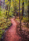 A Trail in Fall Colors. Fall in Zion National Park Utah with the leaves changing colors along a dirt path Stock Photos