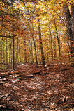 Trail through fall foliage in Pennsylvania Stock Photography