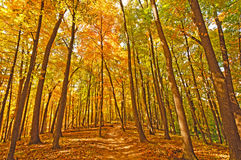 Trail into fall forest colors stock photography