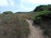 Trail Through the Field. At Montana de Oro State Park, Los Osos, California Royalty Free Stock Photo