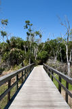 Trail in Florida Royalty Free Stock Images