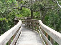Boardwalk Trail in Florida Maritime Woods Stock Photography