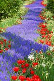 A trail of flower. S in mostly blue and red Royalty Free Stock Images