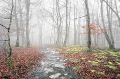 Trail in foggy forest on autumn Royalty Free Stock Images
