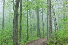 Trail Through Foggy Spring Forest Royalty Free Stock Image