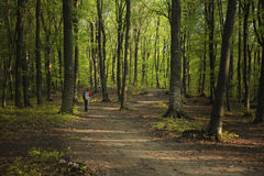 Trail in fogy forest Stock Photos