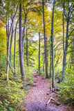 Trail with foliage in a forest in autumn Stock Images