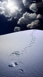 Trail of footprints in desert Royalty Free Stock Image