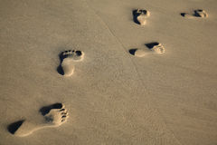 Trail of footprints in sea sand - copy space Royalty Free Stock Photos