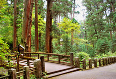 Trail in the forest. Peaceful forest in coutry side of Japan Royalty Free Stock Photography