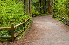Trail in a Forest Royalty Free Stock Photo