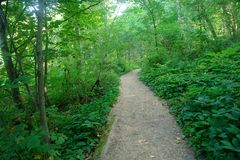 Trail through forest. A picture of a trail running throught the lush greenery of forest Stock Photos