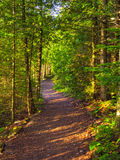 Trail in the forest. Wide winding forest path lit by the setting sun shining through the trees Royalty Free Stock Photography