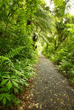 Trail in forest Royalty Free Stock Photography