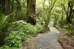 Trail in forest Stock Images