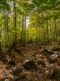 Autumn Forest Trail, Adirondack Mountains, New York Royalty Free Stock Photography
