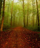 Trail in the forest in a fall morning with fog Royalty Free Stock Images