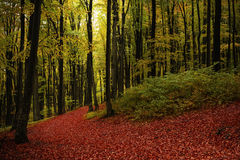 Trail in the forest during autumn Royalty Free Stock Images