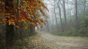 Trail in the forest autumn with nature sounds. Trail in the fogy forest autumn with nature sounds stock footage
