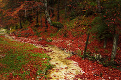 Trail in a forest during autumn Stock Photo