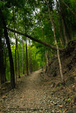 Trail in forest and bamboo. Trail waking in rain forest Royalty Free Stock Photos