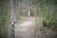 Trail through a forest on a cloudy day Royalty Free Stock Photo