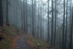Trail in Forest Covered in Fog Royalty Free Stock Photography