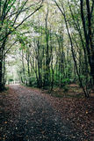 Trail in the forest covered with leaves. In a mysterious forest trail is covered with fallen leaves stock images