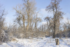 The trail in the forest after the first snowfall in the early mo Royalty Free Stock Photography