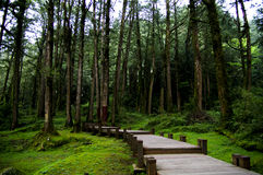 Trail in the forest. Trails to go out forest in Taiwan famous mountain Alishan Royalty Free Stock Photos
