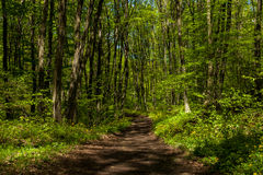 Trail in the forest. Hiking trail in spring forest Royalty Free Stock Photo