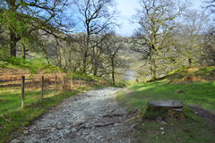 Trail in forest in hilly English countryside. English countryside landscape taken in Lake District, North Yorkshire, England. Rough trail between trees in a Stock Image