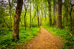 Trail through the forest at Lancaster County Central Park, Penns Stock Photography