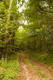 Trail forest Monpazier France Royalty Free Stock Photography