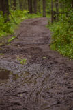 Trail in the forest. Forest path after the rain Royalty Free Stock Photo