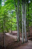 Trail in the forest in Plitvice Lakes National Park Stock Image