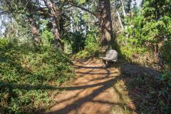 Trail through the forest of Point Lobos State Natural Reserve, Carmel-by-the-Sea, Monterey Peninsula, California stock image