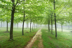 Trail in forest with rain Royalty Free Stock Photo