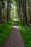 Trail through a forest. Scenic view of a trail receding through a forest stock images