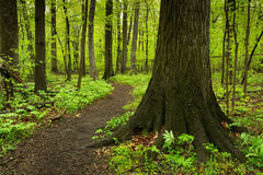 Trail in forest,springtime. Stock Photo
