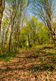 Trail through the forest in springtime. Walk in fine weather Stock Photo
