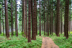 Trail in a forest Stock Image