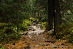 Trail in the forest. Tatransky narodny park. Vysoke Tatry. Slovakia. royalty free stock photography