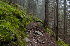 Trail. In forest. West Tatras, Slovakia Royalty Free Stock Image