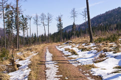 Trail in the forest during the winter Stock Photography